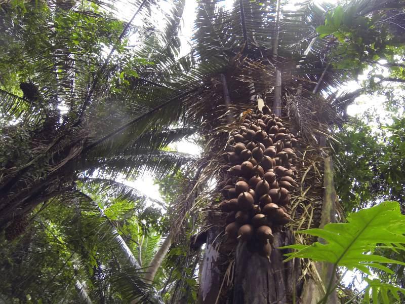 Belize flora