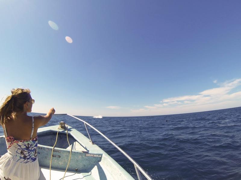 Puerto Vallarta whales
