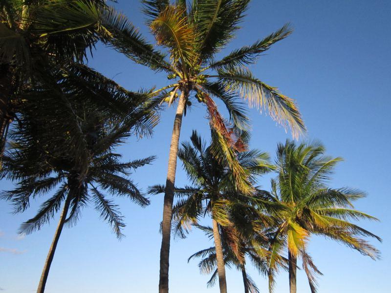 tropical miami