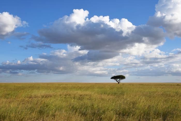 Africa savanna