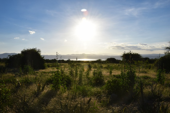 Manyara lake Africa