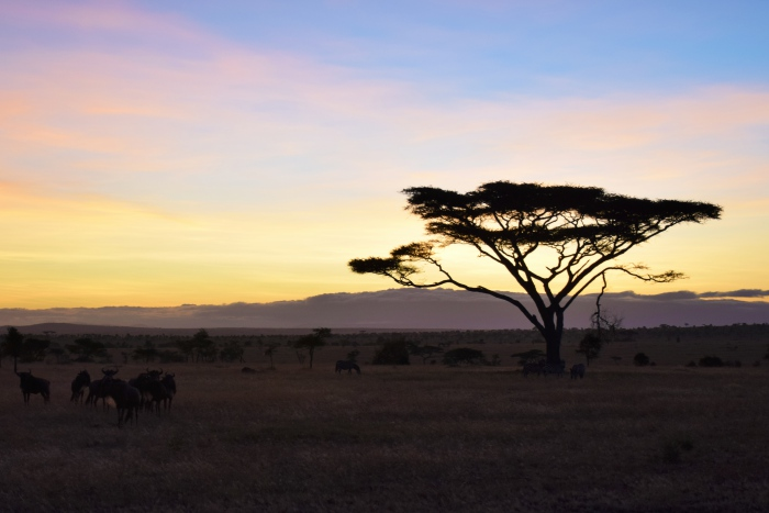 Morning in Serengeti