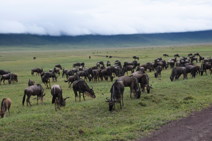 Ngorongoro Conservation Area wildlife