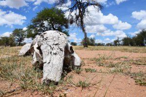 Serengeti camping area