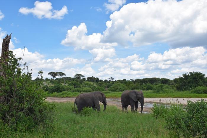 Tanzania elephants
