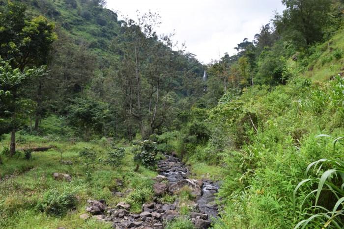 Tanzania nature