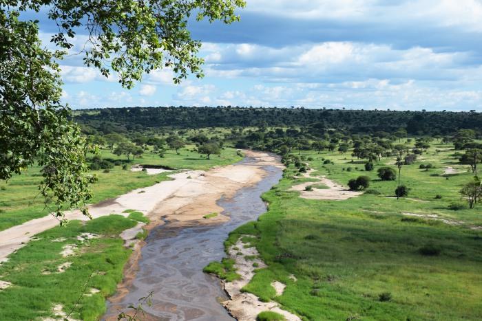 Tarangire national park Africa
