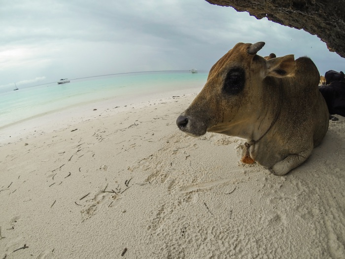 Zanzibar beach animals