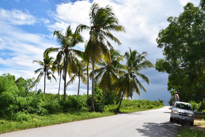 Zanzibar nature