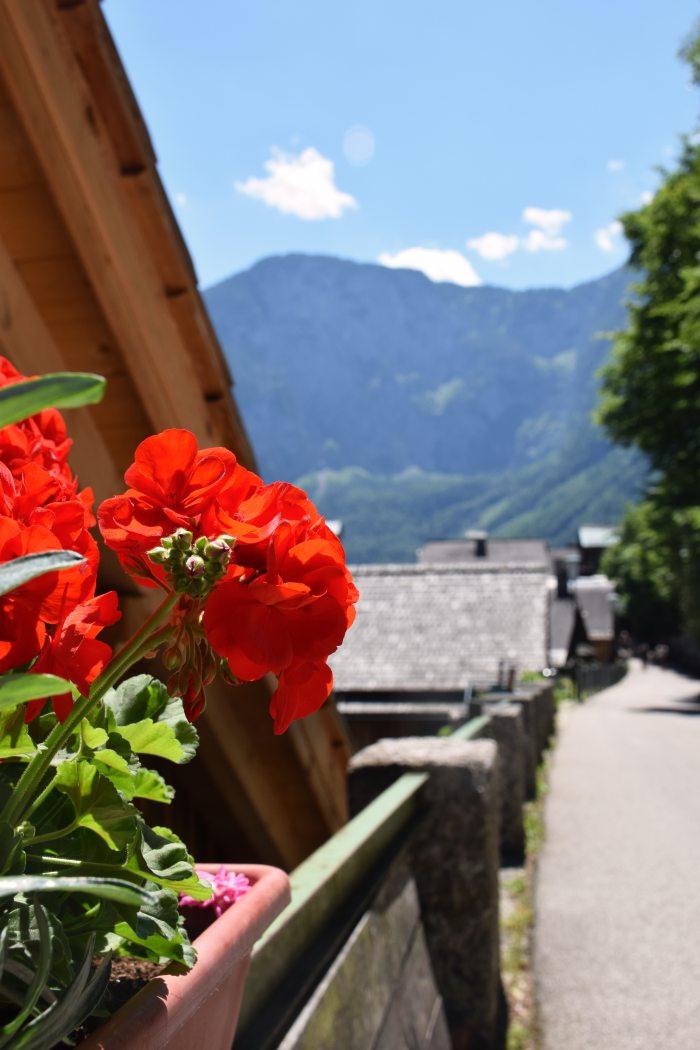 Hallstatt street flowers