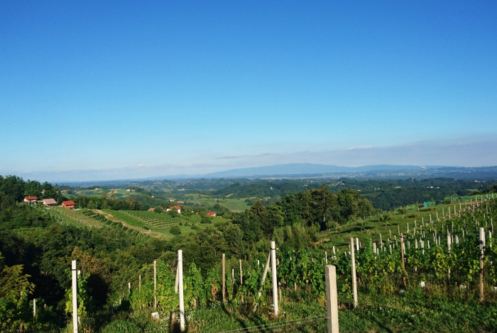 Slovenia vineyards