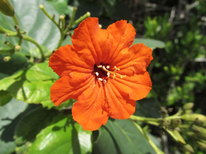 Bahamas flower flora nature