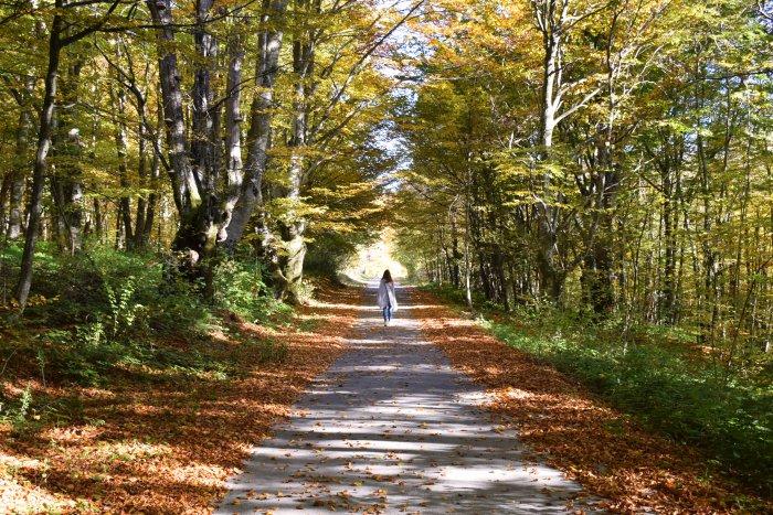 Colors of autumn Croatia