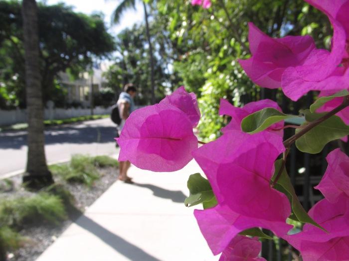 Florida Keys nature