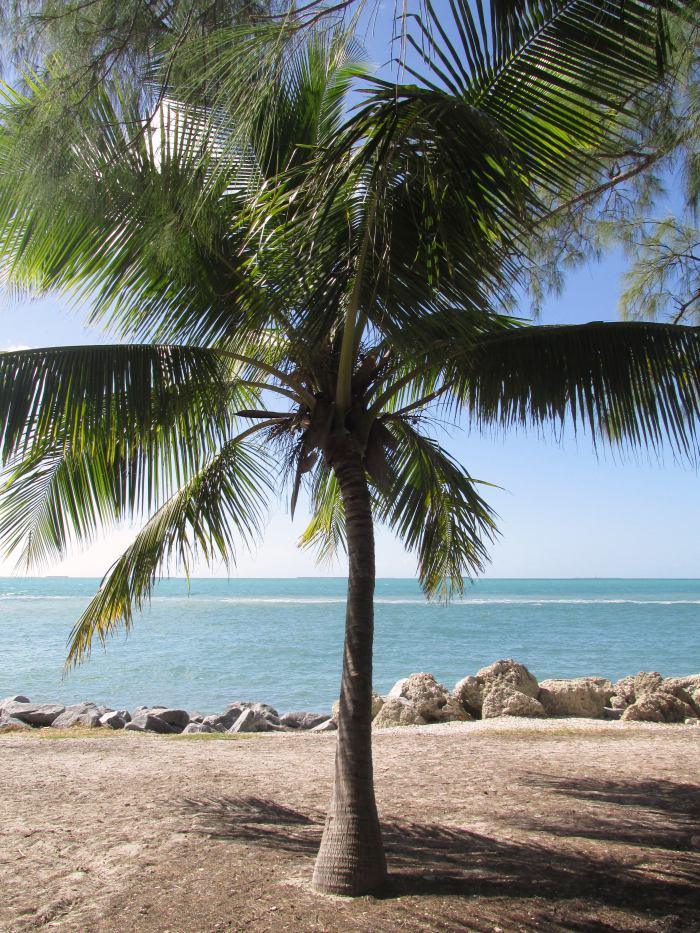 Fort Zachary Taylor Historic State Park beach