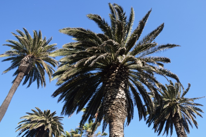 Palm tree paradise Los Angeles