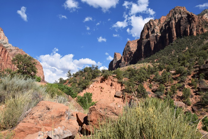 Red rocks at Zion National Park