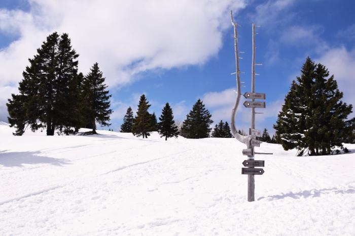 Velika Planina wooden signpost